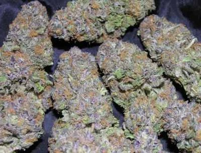 Medical Marijuana, Extracts, Seeds, Edibles for sale