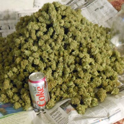 Buy Top Shelf Cannabis buds,Edibles,Shatters,wax oil etc Text/Call +1 731 599 2856