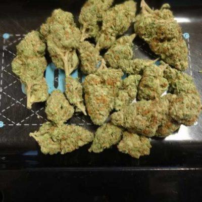 High Grade Medical Marijuana Sativa